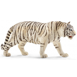 Male white tiger