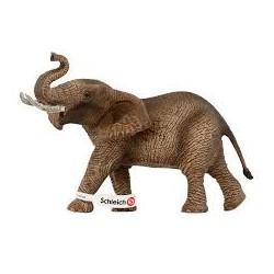 African elephan